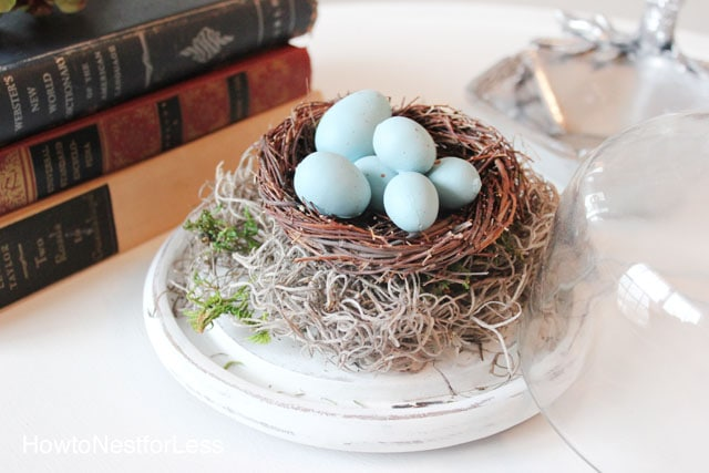 robins egg nest glass cloche